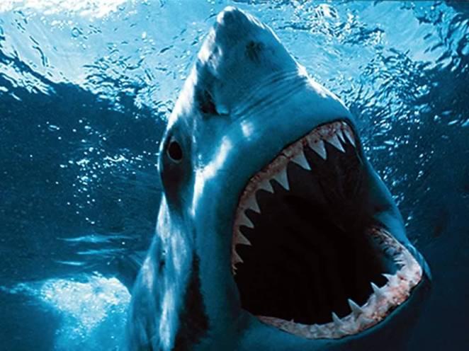 20. Tiburón blanco