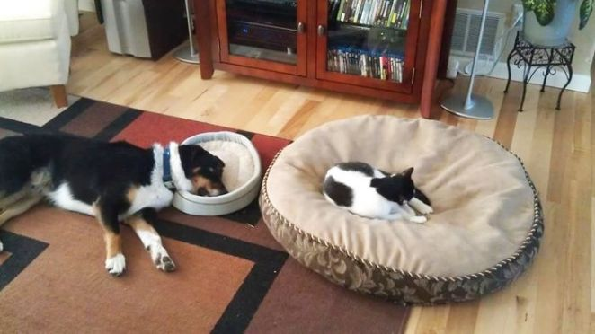 Have The Huge Bed While The Dog Has The Small Bed!