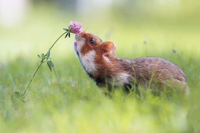 animals_sniffing_flowers