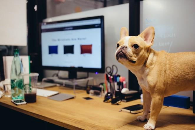 Resultado de imagen para dog office