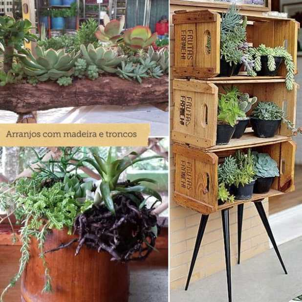 Dicas para manter plantas