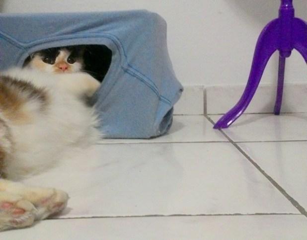 Casa para gato feita com papelão e camiseta