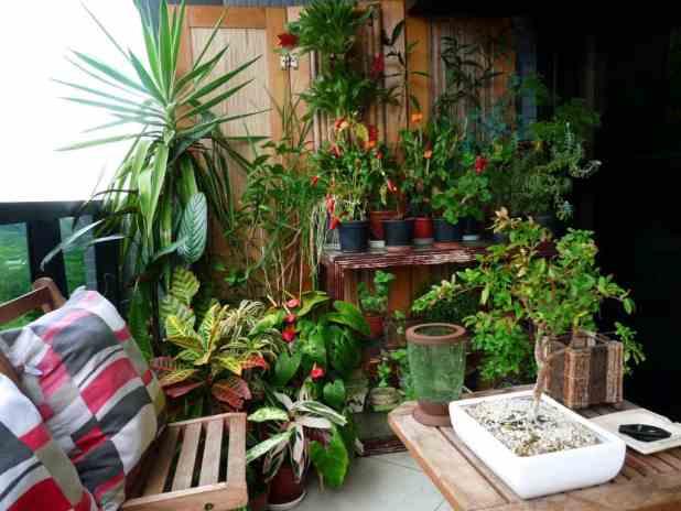 plantas para varanda 1