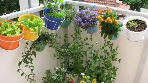 plantas para varanda