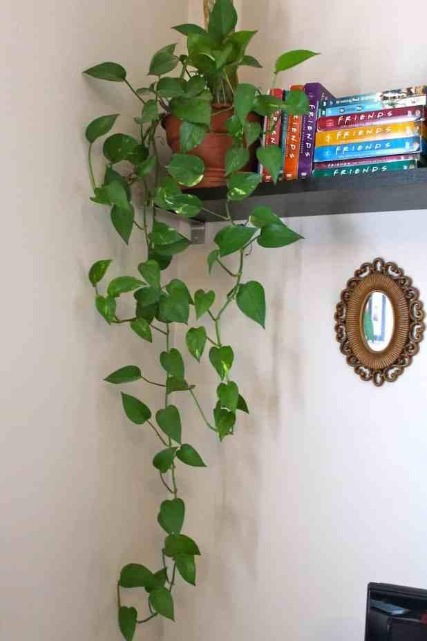 15 plantas que purificam o ar