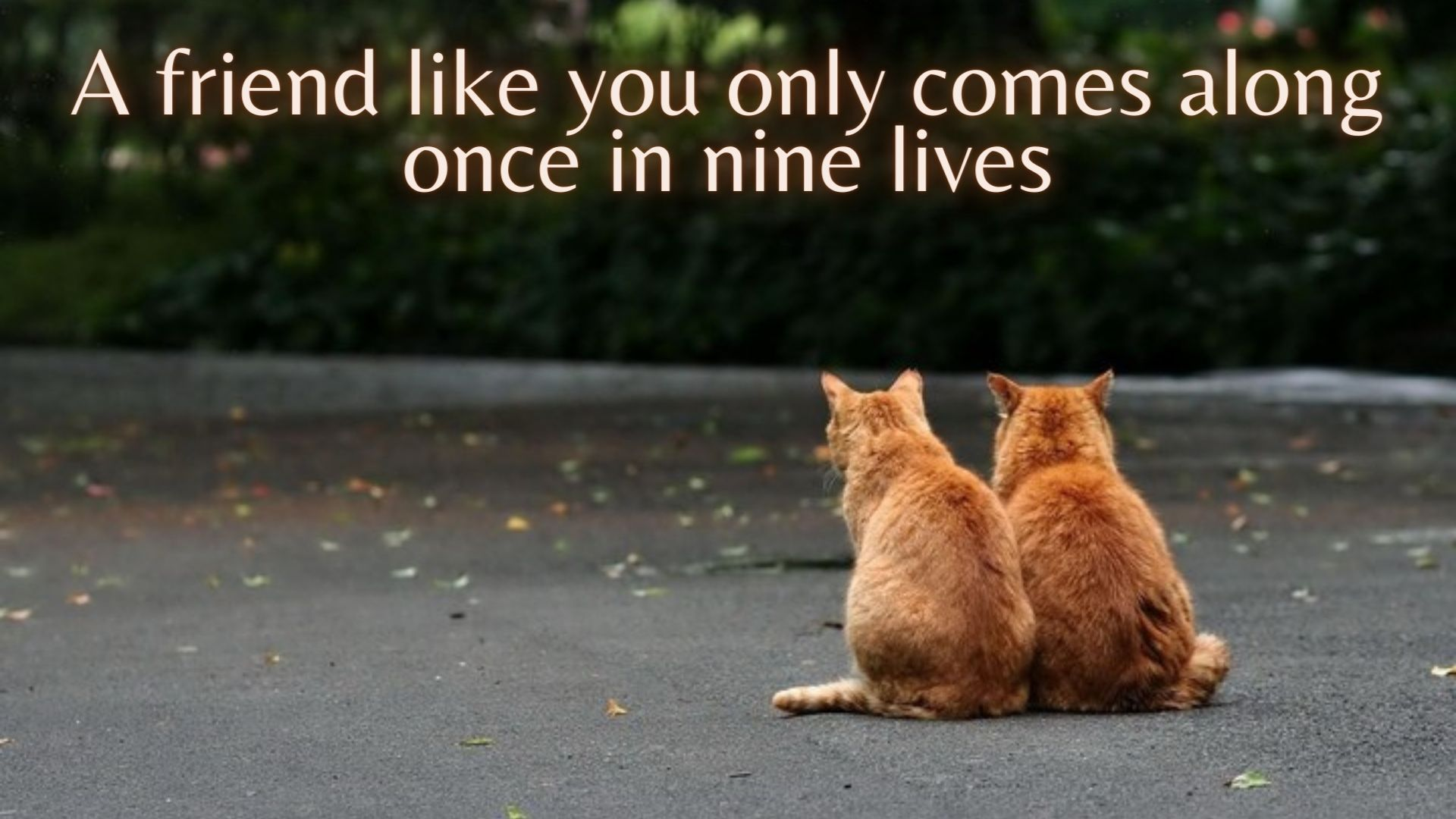 A friend like you only comes along once in nine lives
