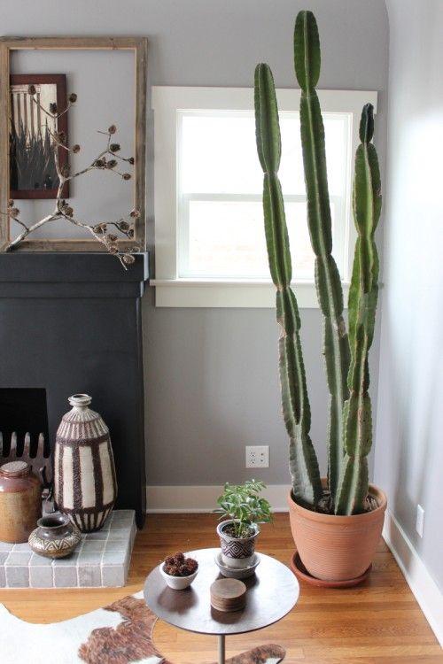 Dans La Vie Il Y A Des Cactus Entre Zen Et Déco