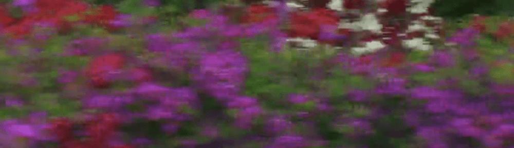 screenshot from 花儿 untitled 2010 by Ren Bo
