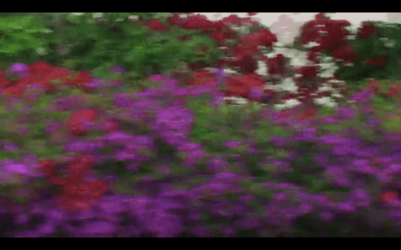 screenshot from 花儿 untitled 2010 by Ren Bo