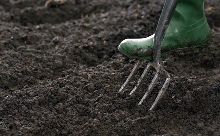 การเตรียมดินปลูกผัก
