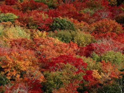 Autumn Ethan Holmes
