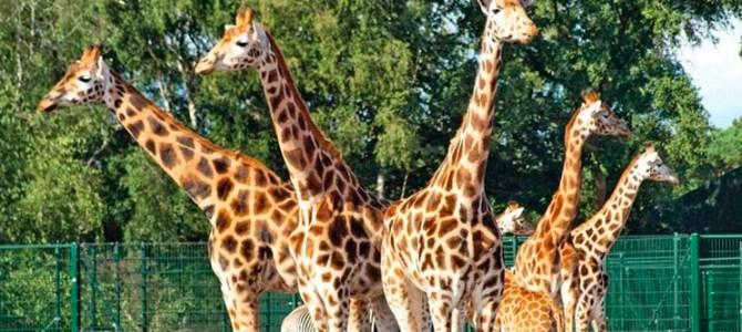 Review: vakantie met baby op Vakantiepark Beekse Bergen