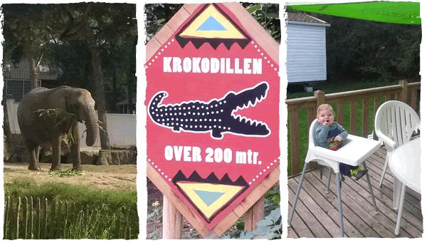 Safaripark Beekse Bergen met Eurocamp