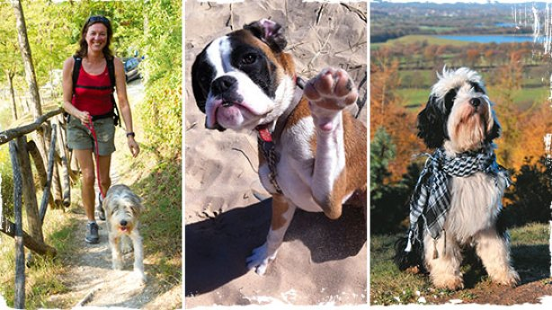 Top 5 beste honden campings - Vakantie met hond