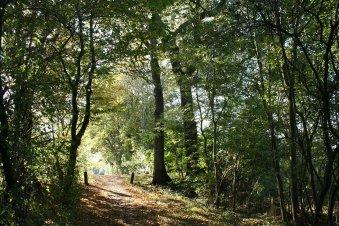 Wandelroute Friesland - Camping 't Hop