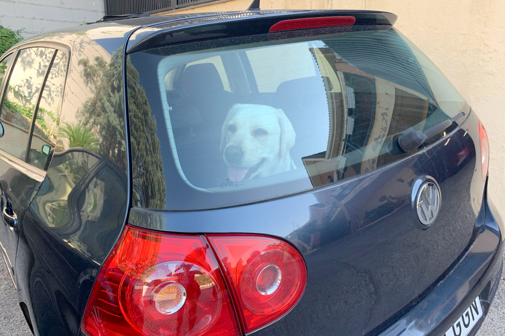 Sally en coche