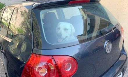 Cómo viajar con mascotas en coche