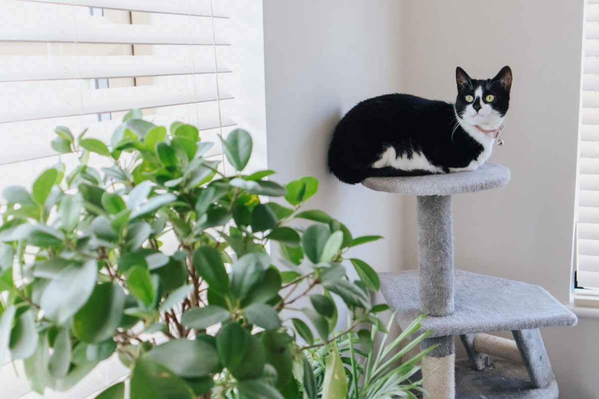 cute cat resting on tower near wall