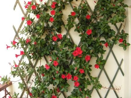The 5 Best Arizona Climbing Plants For Your Backyard
