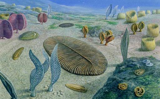 Vorstellung des Lebens im späten Ediacarium