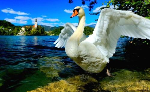 Slovenië : het groene hart van Europa.