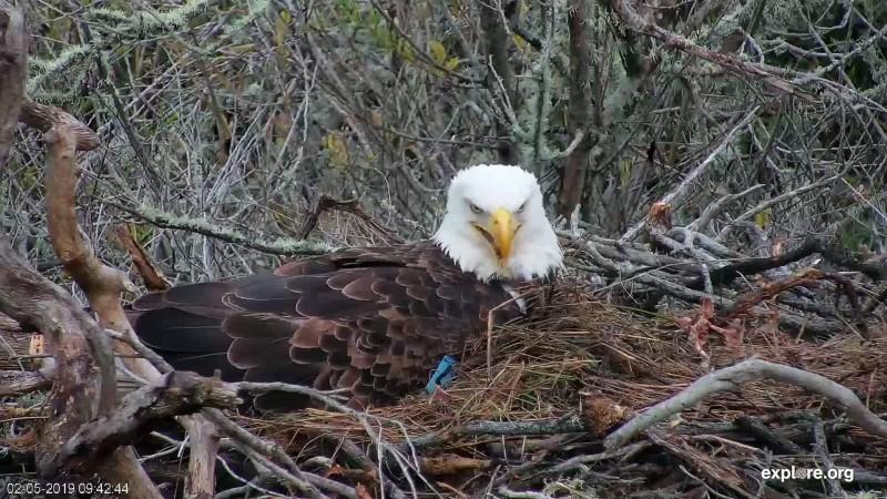 Eagles_FP_Squeaky1_2.5.19
