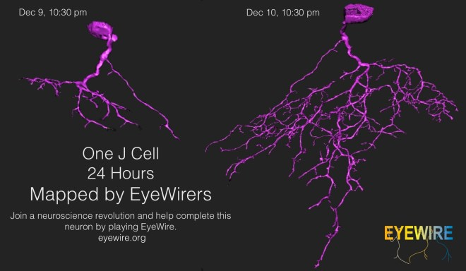 J Day EyeWIre progress of mapping a J Cell neuron