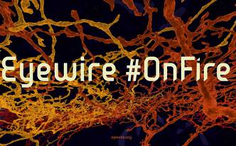 EyeWire OnFire, OnFire, EyeWire, citizen science, science design, neuroscience, neurons, crowd source,