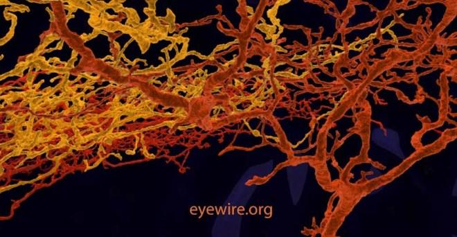 eyewire onfire, eyewire, neurons