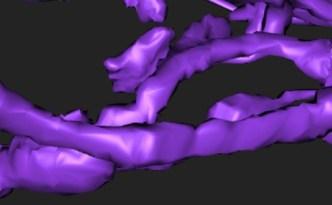 neuron branches, eyewire