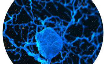 neuron in space circle eyewire, lore of kor, eyewire