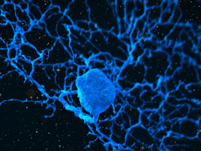 neuron in space square eyewire, eyewire, neurons, neuron, brain, Kor