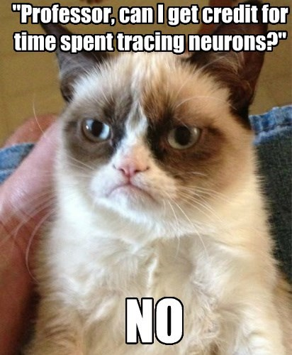 eyewire meme grumpy cat 1