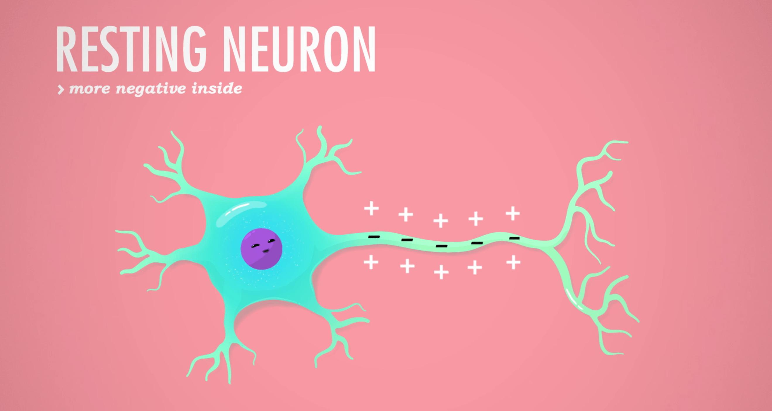 Crash Course Nervous System 2: How Action Potentials Work
