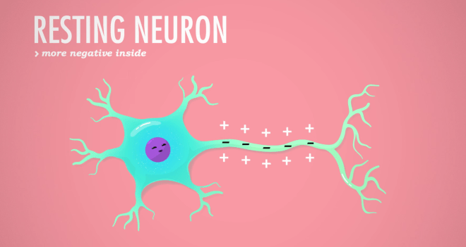 Neuron Resting Potential, crash course, resting potential, eyewire