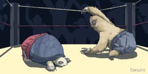 sloth vs turtle, sloth, turtle, sloths, turtles, versus, sloth versus turtle, funny sloth, funny turtle