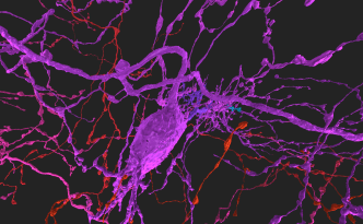 zebrafish, zfish neuron, eyewire, neuron