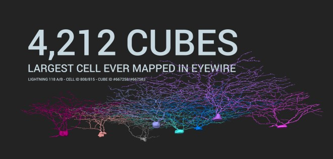 largest neuron, neuron, cell, eyewire, citizen science, 5 years