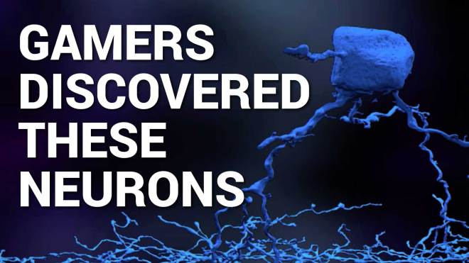 gamers, neurons, neuroscience, eyewire, brain