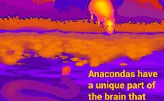 Lionize, eyewire, citizen science, Happy Hour, zoo brains, brain zoo, brain, neuroscience, cit sci, research, anaconda, infrared, hunt, evil cubes