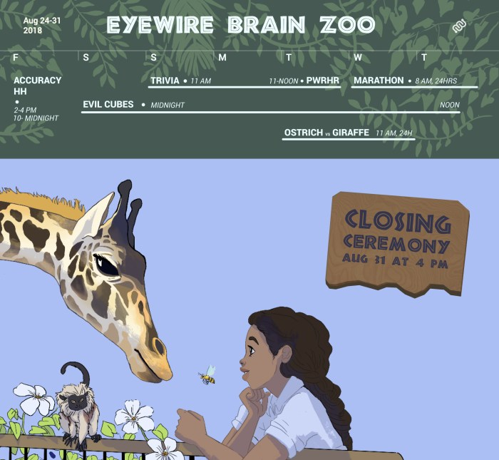 Eyewire Brain Zoo, Zoo Brains, eyewire, citizen science, animal brains