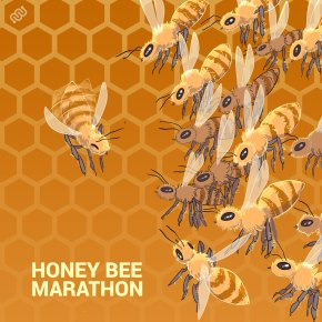 honey bee, bees, marathon