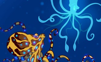 Eyewire, citizen science, octopus, squid, Undersea Odyssey, marine biology