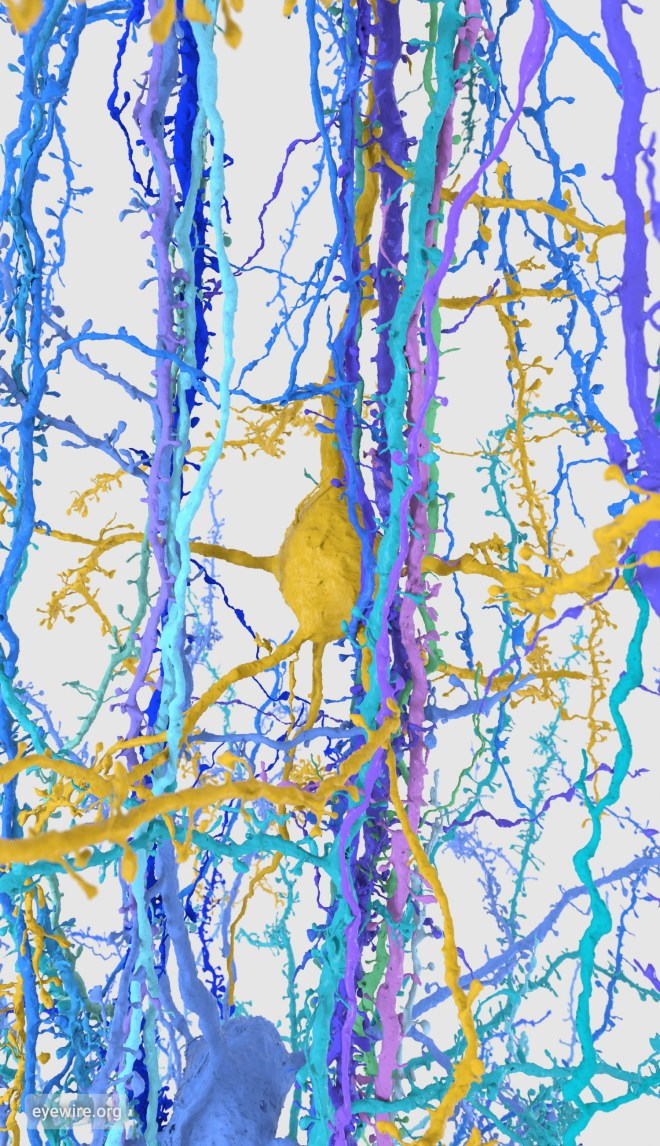 neuron, neurons, iphone wallpaper, neuroscience, amy sterling