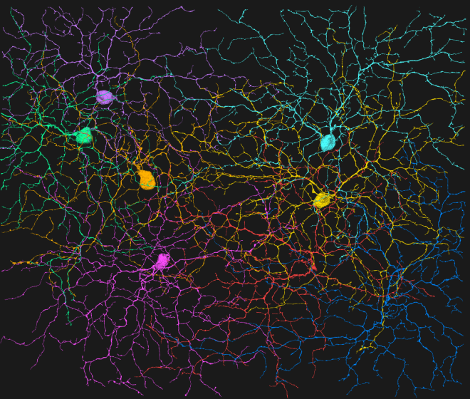 neuron naming, aletheia, 1no