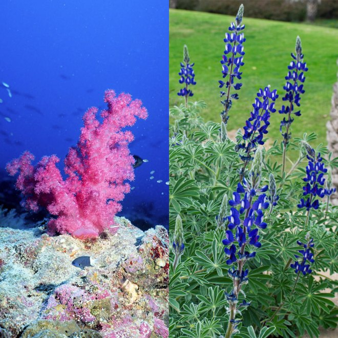 flowers, coral, plant, animal, Eyewire, citizen science