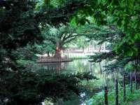 木のトンネルの向こうに、池