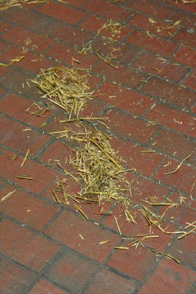 Straw (hay?) at Snowdon