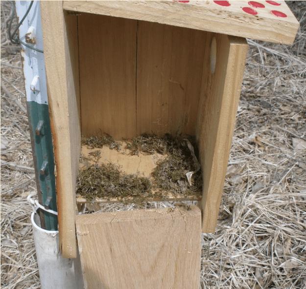 white prairie blue bird house