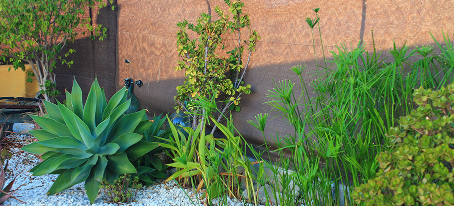 How To Create A Stunning Low Maintenance Garden Fantastic Services Blog